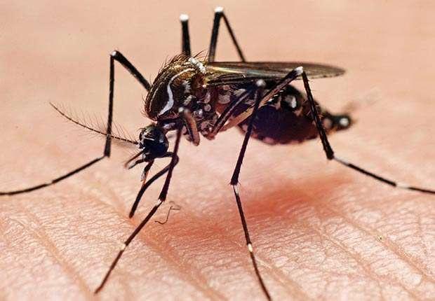 620-mosquioes-bed-bugs-esp-imgcache-rev1464021133762-web