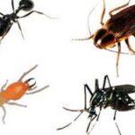 ٥ انواع من الوصفات للقضاء على حشرات المطبخ